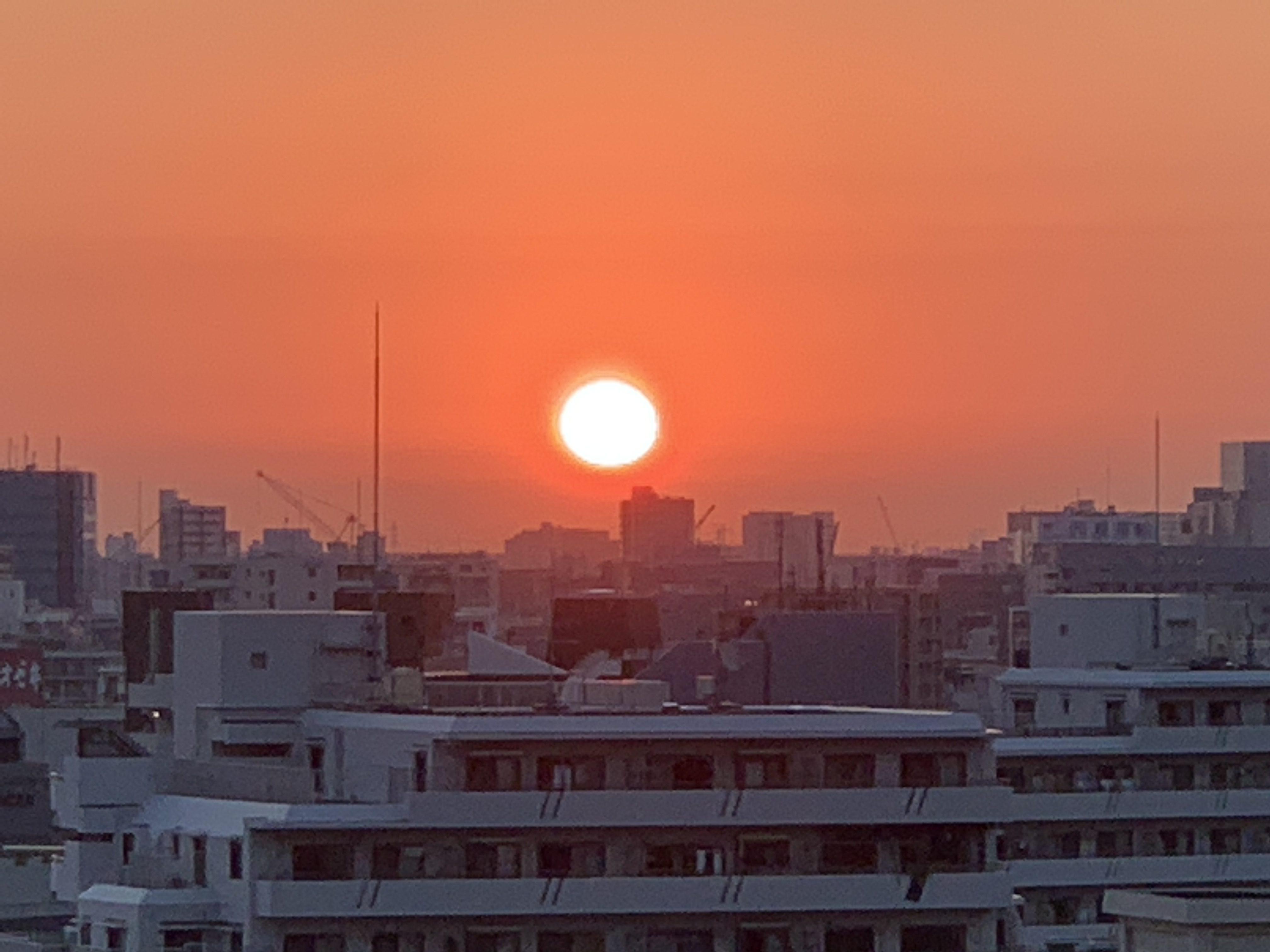 オレンジ色の夜明け「しなやかに・たおやかに」