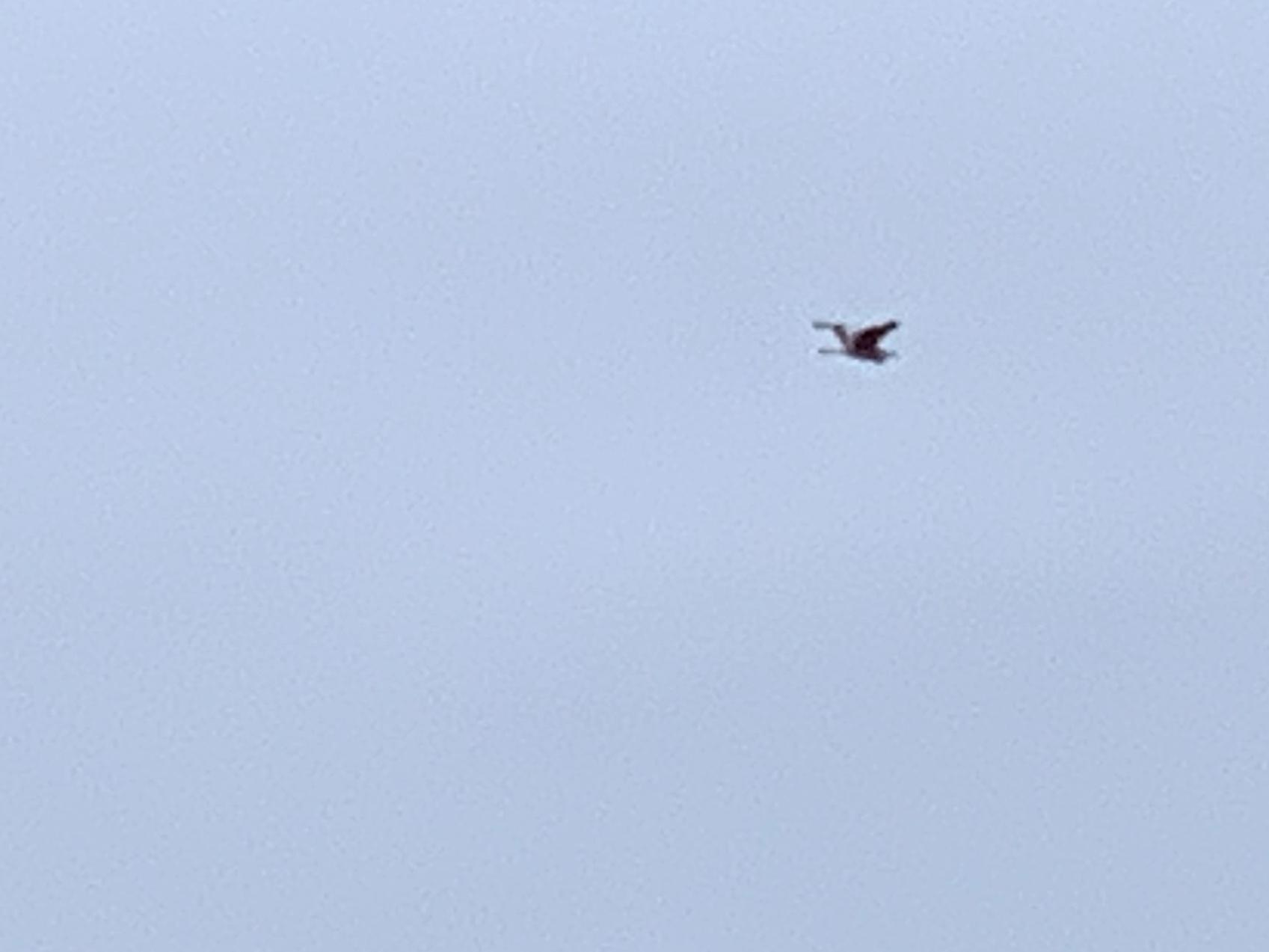 寒い空を飛ぶ元気な鳥「笑顔は幸せパワー」