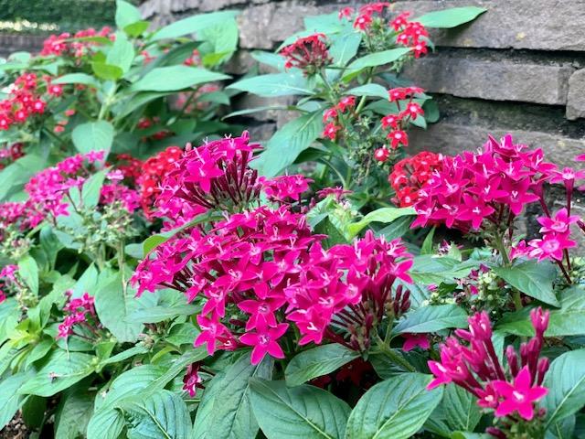 イングリッシュガーデン・秋の小花がいっぱい💐