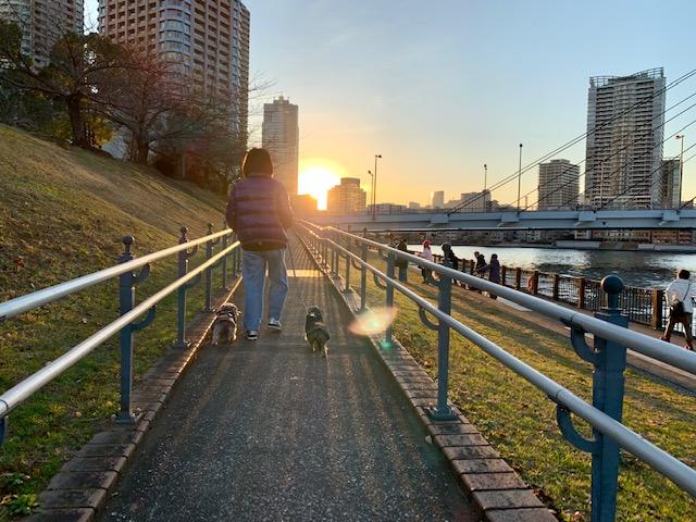 太陽に向かってお散歩