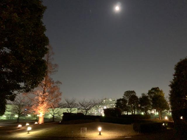 都会のオアシス・穏やかな夜