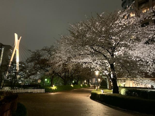 やっと時間が取れて夜のお散歩