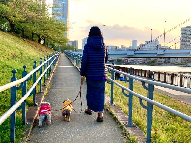 のんびりゆっくり夕方のお散歩